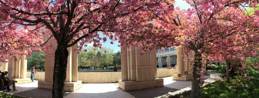 Bilkent'te Bahar, yeni yapraklar ve çiçeklerle müjdeleniyor!